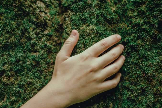 Beneficios del musgo para la piel