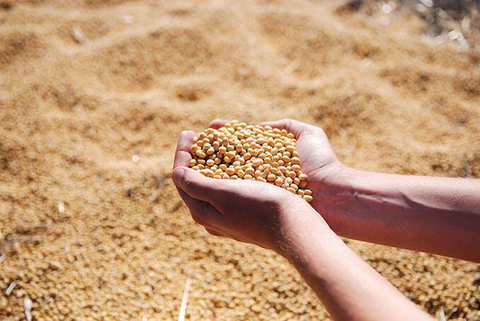 La soja está entre los alimentos que ayudan a prolongar el bronceado - El Círculo de la Belleza